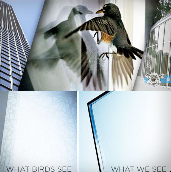 bird friendly glass