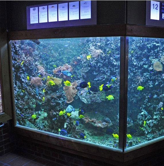 Custom fish tank bear glass a full glass fabricator in usa for Custom fish tanks
